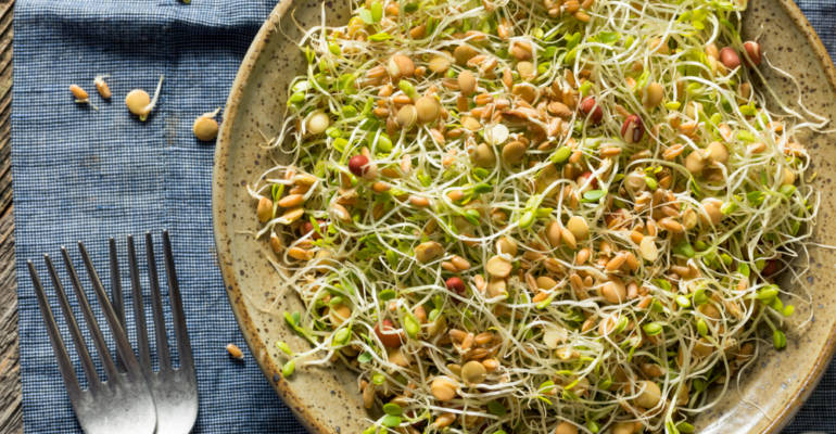 Sprouted bean and alfalfa salad